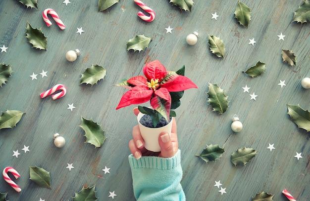 Mão no suéter turquesa detém estrela de natal, vaso de flores poinsétia.