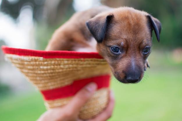 Mão pega um chapéu e dentro há um filhote de cachorro