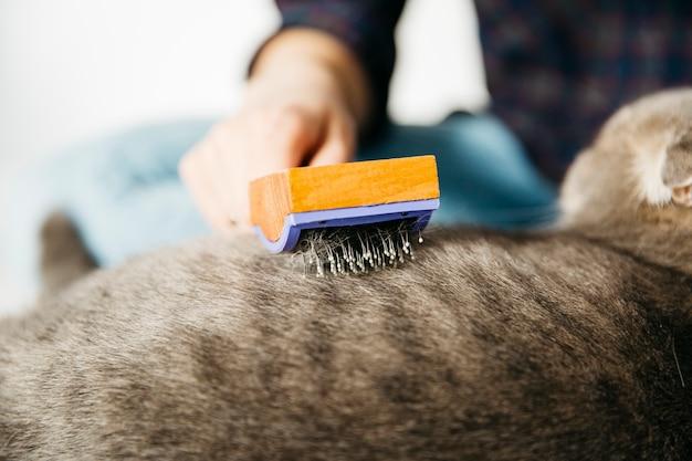 Mão penteando gato com escova