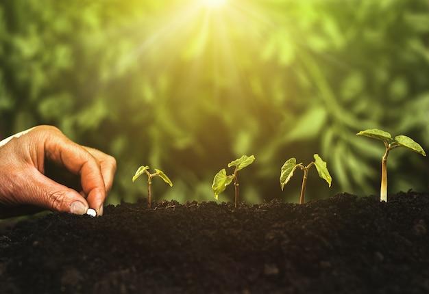 Mão plantando mudas passo crescente no jardim com luz do sol. conceito de crescimento, sucesso e inovação.