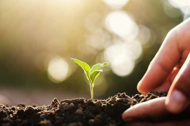 Mão plantando pequena árvore. conceito mundo verde