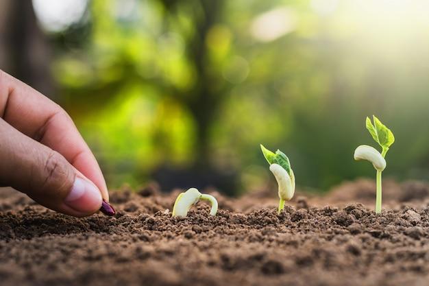 Mão plantando semeando crescendo passo no jardim com luz do sol