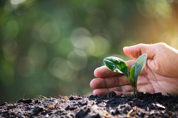 Mão protegendo uma planta jovem verde com crescimento no solo