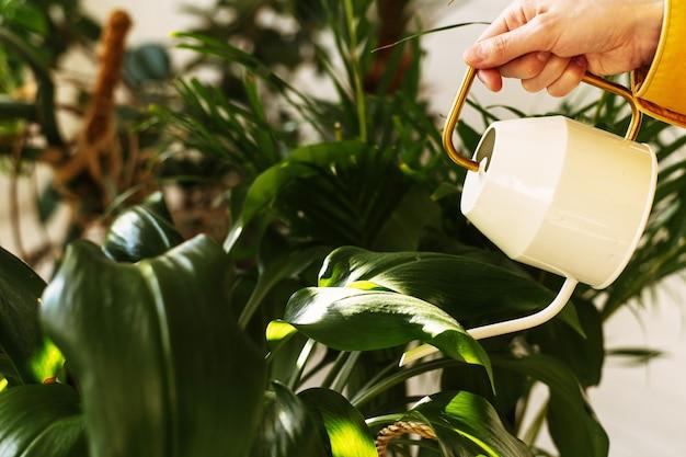 Mão que rega flores e plantas