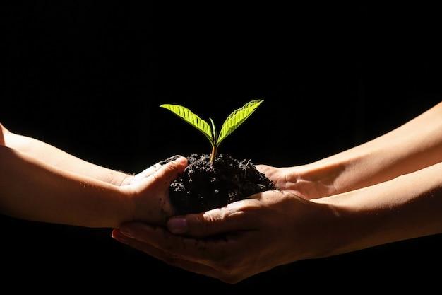 Mão que rega plantas jovens