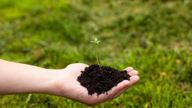 Mão segura uma planta jovem de maconha medicinal na palma da mão