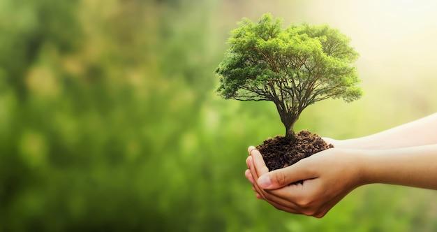 Mão segurando a árvore no borrão verde natureza