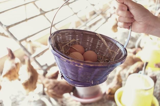 Mão segurando a cesta de ovos de galinha orgânicos frescos, atividade de páscoa para crianças