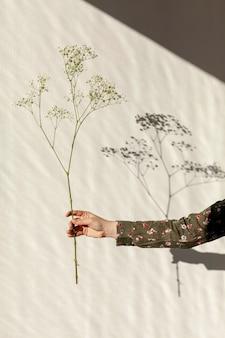 Mão segurando a flor natural da primavera