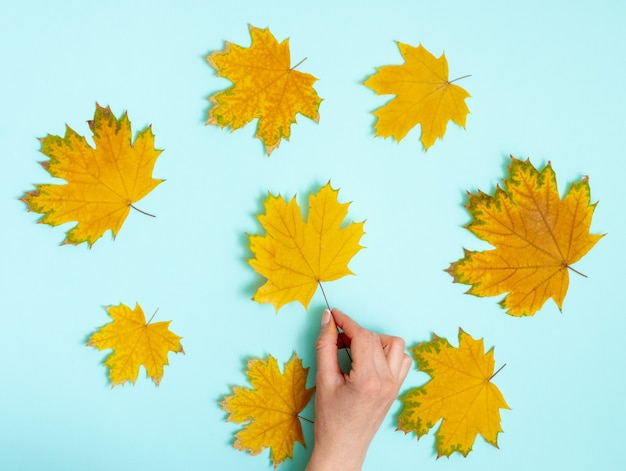 Mão segurando a folha de bordo amarela sobre fundo de outono de folhas secas de bordo dispostas em um círculo em azul claro, fundo de vista superior, lay flat, copie o espaço. fundo de outono