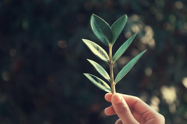 Mão segurando a folha no fundo verde da natureza