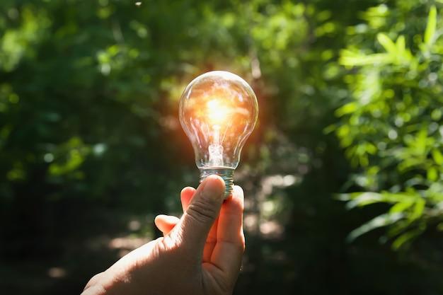 Mão segurando a lâmpada com luz do sol na floresta