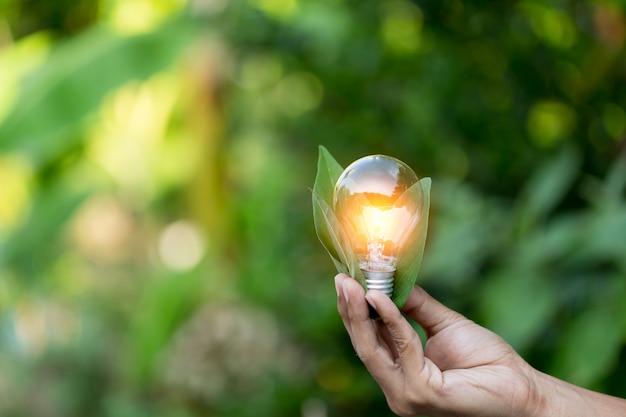 Mão segurando a lâmpada
