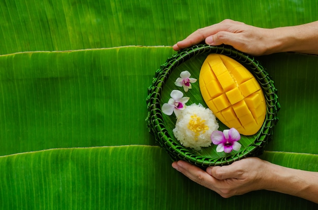 Mão segurando a sobremesa tailandesa - arroz pegajoso de manga que coloca no prato de folha de bananeira.