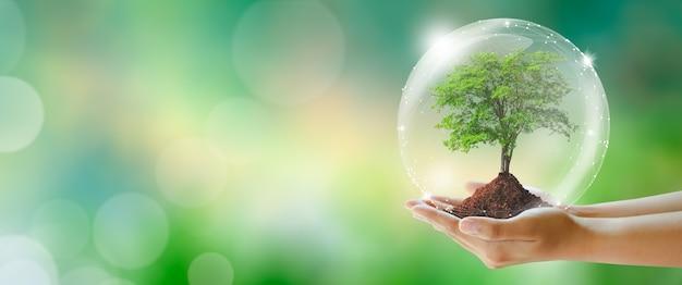 Mão segurando árvore com solo dia da terra, ecologia ambiental e salvar o conceito do mundo