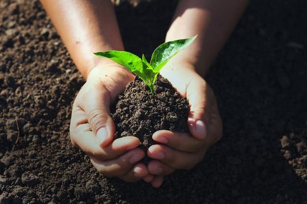 Mão segurando árvore jovem para o plantio.