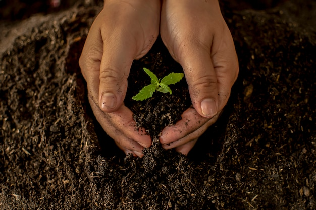 Mão segurando delicadamente o solo rico para suas plantas de maconha