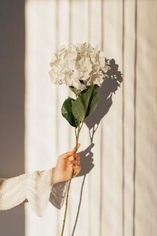 Mão segurando flores naturais