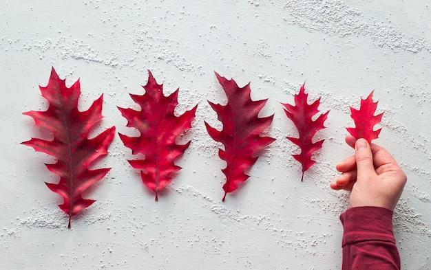 Mão segurando folha de carvalho. progressão de tamanho, plano de fundo texturizado branco.