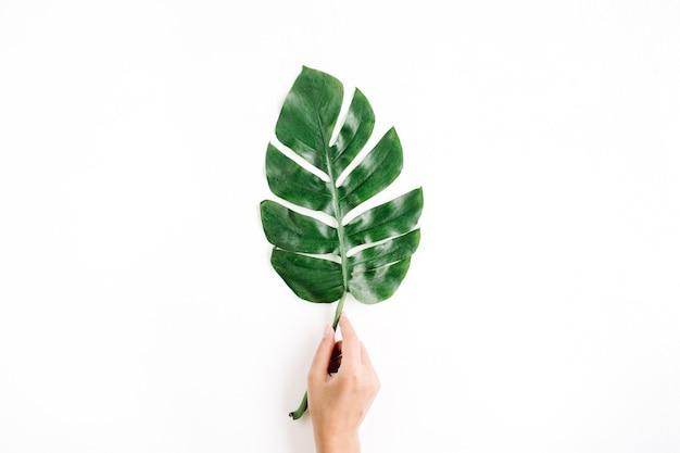 Mão segurando folha de palmeira tropical