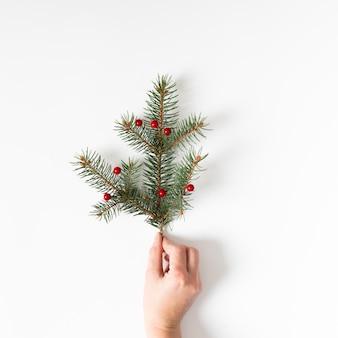 Mão segurando galho de árvore conífera com bagas vermelhas