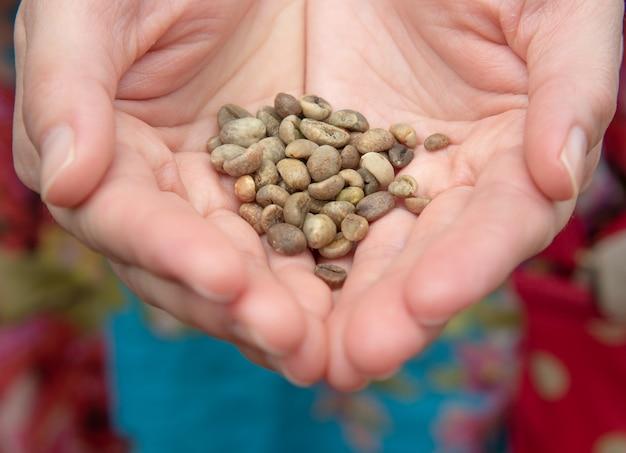 Mão segurando grãos de café