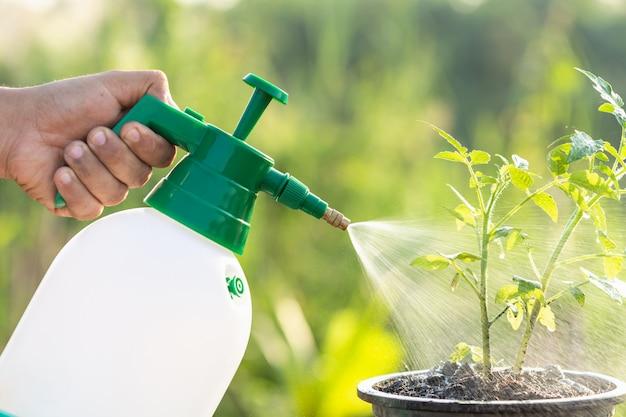 Mão, segurando, lata molhando, e, sprayign, para, planta jovem, em, jardim