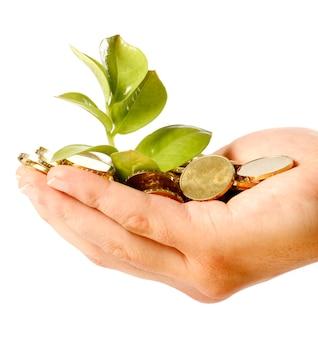 Mão segurando moedas e crescendo folhas frescas