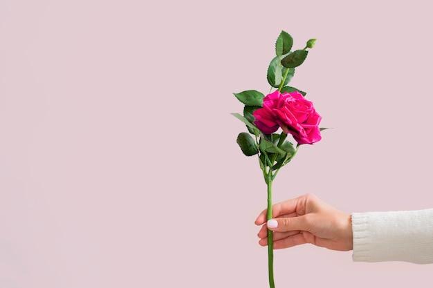 Mão segurando o espaço bonito cópia rosa
