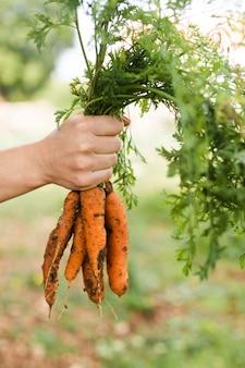 Mão segurando o monte de cenouras