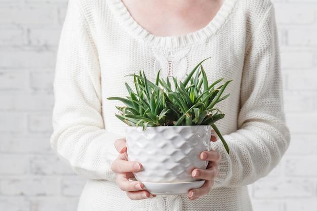 Mão segurando o pote de planta suculenta