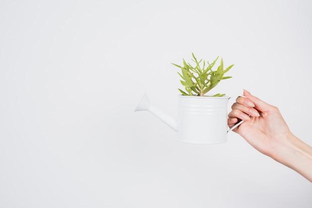 Mão segurando o regador com planta