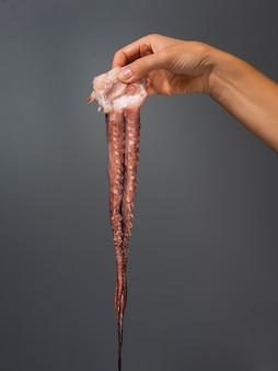 Mão segurando polvo fresco e delicioso