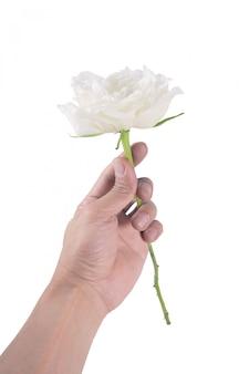 Mão segurando rosa branca sobre branco