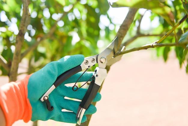 Mão segurando tesouras de poda no jardim