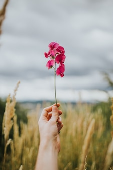 Mão segurando um galho de flor bonita em um campo com céu nublado ao fundo