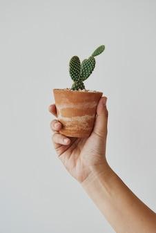 Mão segurando um pequeno cacto em um vaso fofo