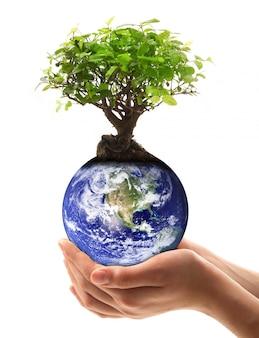 Mão segurando um planeta terra com árvore