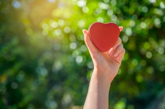 Mão segurando uma caixa de forma de coração com a luz do sol passando pelas mãos