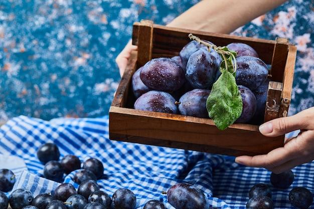 Mão segurando uma cesta de madeira com ameixas de jardim sobre fundo azul