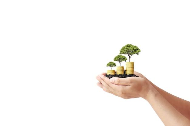 Mão segurando uma pequena árvore crescendo a partir de moedas no conceito de finanças de fundo branco