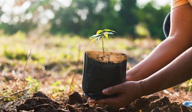 Mão segurando uma pequena árvore para plantar na natureza. conceito de mundo verde
