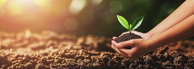 Mão segurando uma pequena árvore para plantar