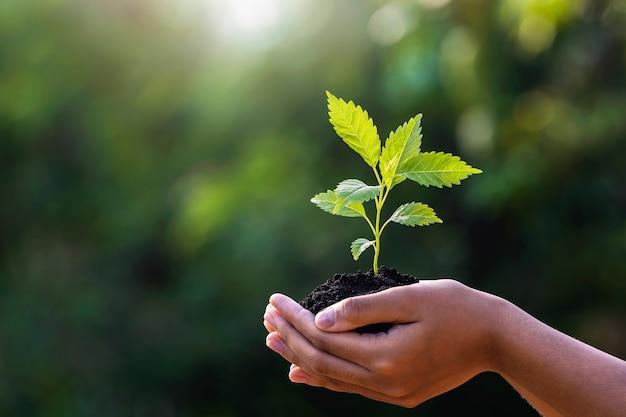 Mão segurando uma planta jovem com luz do sol na natureza verde