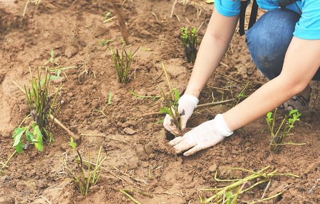 Mão segurando uma planta jovem para plantar no solo, plante árvores na floresta na área
