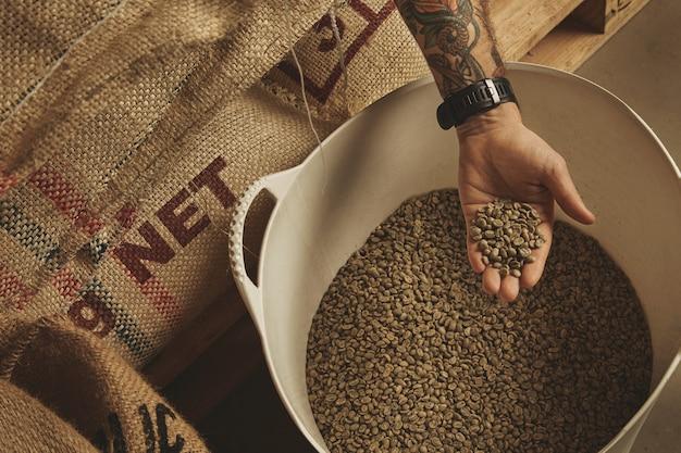 Mão tatuada de barista segura grãos de café verdes crus de uma cesta de plástico branco, acima de sacos de algodão no europalet no armazém.