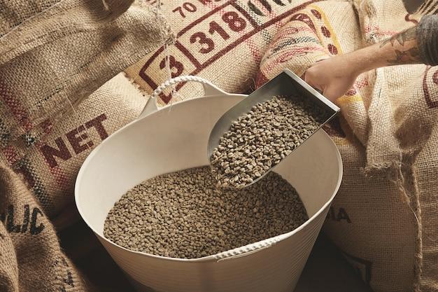 Mão tatuada do torrador segurando uma concha de metal com grãos de café verdes frescos e crus acima da cesta de plástico