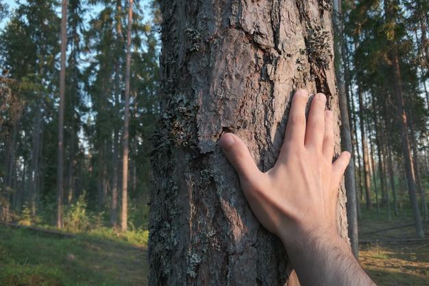 Mão toca um tronco de pinheiro.