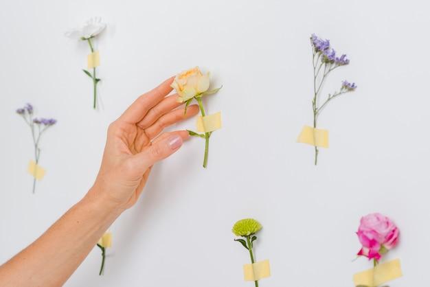 Mão tocando flores da primavera
