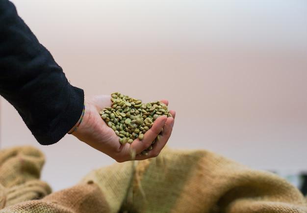 Mão tocando grãos de café dentro do saco de juta